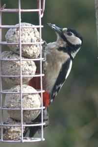 p.birds.13 408