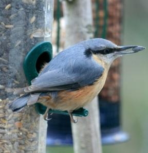 p.birds.10 054