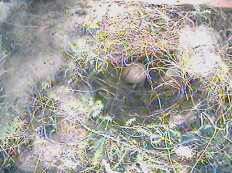A fuzzy photo of our first Great Tit egg in the camera box.