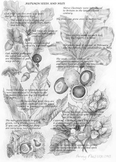 autumn seeds text