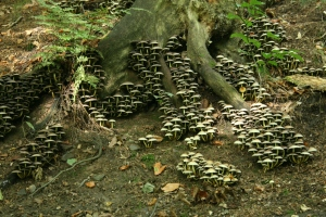 A typical display of Sulphur Tuft, the colour fading into late autumn