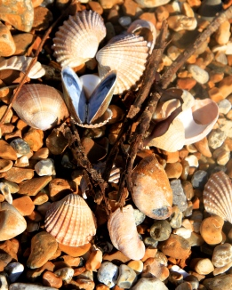 I didn't arrange these shells, they were just washed up among the shingle of Rye Harbour like this