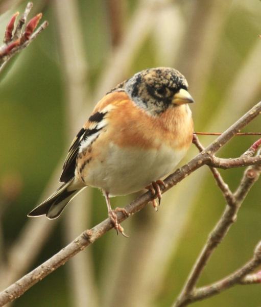 p.birds.12 576