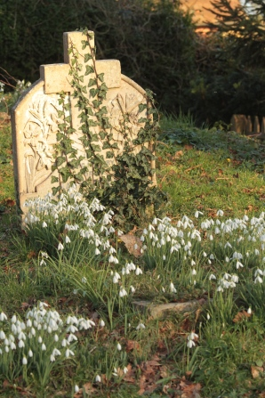 Penhurst Graveyard in Sussex is bright with Snowdrops right now