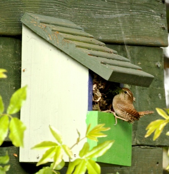 Simple ones like this, with an open window, can be used by Wrens, Robins etc.