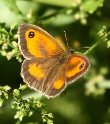 Gateway Butterfly