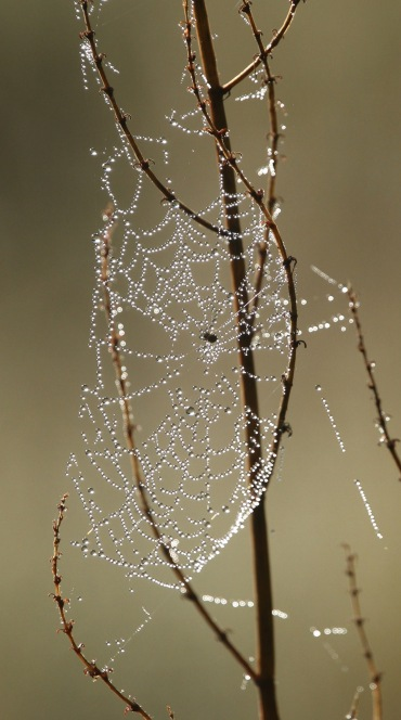 Orb web.