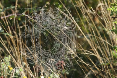 Orb spider-web