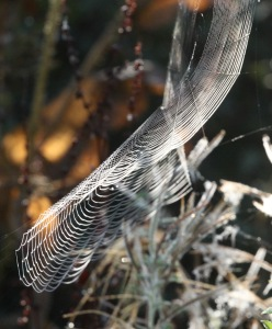 This Orb web curved wonderfully