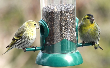p.birds.13 403