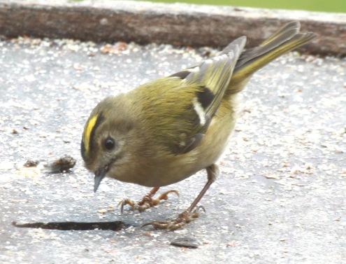 p.birds.13 420