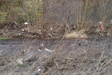 Plastic waste along the Don