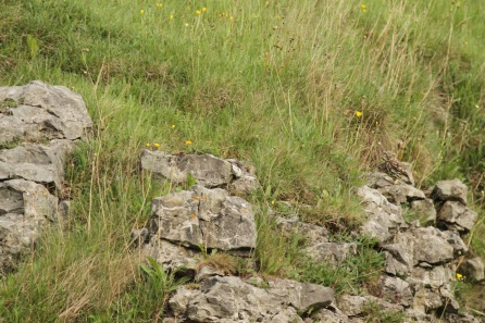 Little Owls- well camouflaged in woodland and against the rocks.