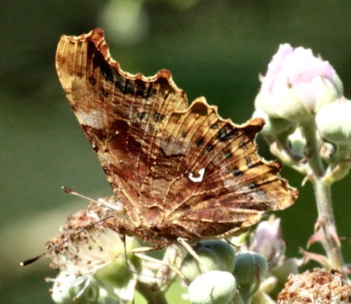 Comma, showing the 'comma'