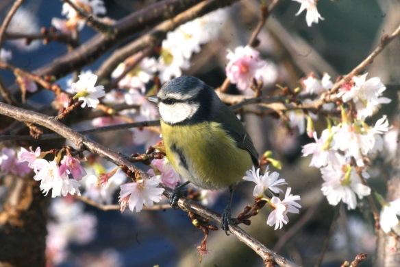 p.birds.12 001.jpg