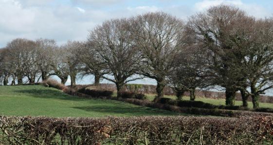 Oak-lined lane- Hooe